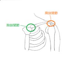 胸鎖関節スキャン.png