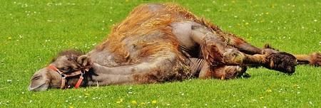 camel-1348472_640.jpg