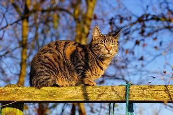 cat-1869576_640.jpg