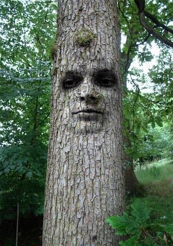 tree-1519868_640.jpg