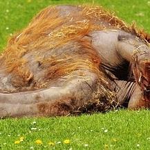 うつぶせ寝は首への拷問です