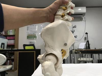 二足歩行で骨盤をやや後方に変異した形